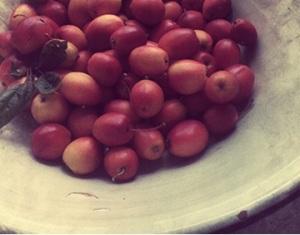 the jam (1)